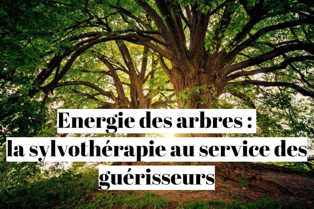 Energie des arbres : la sylvothérapie au service des guérisseurs