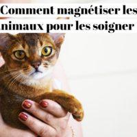 Magnétisme animalier : Comment magnétiser les animaux pour les soigner ?