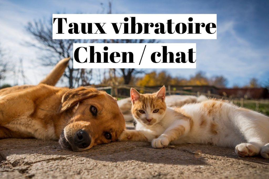 Taux vibratoire d'un chat ou d'un chien?